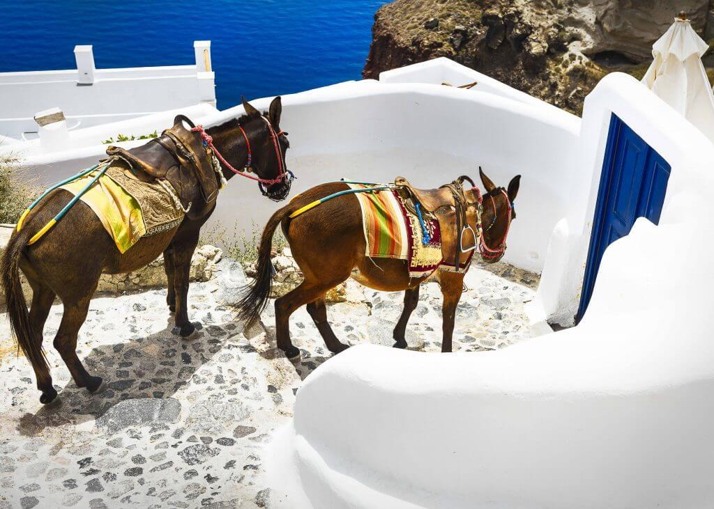donkey wedding transportation idea